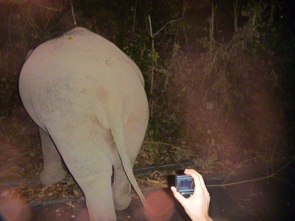 Divocí sloni v Khao Yai na silnici