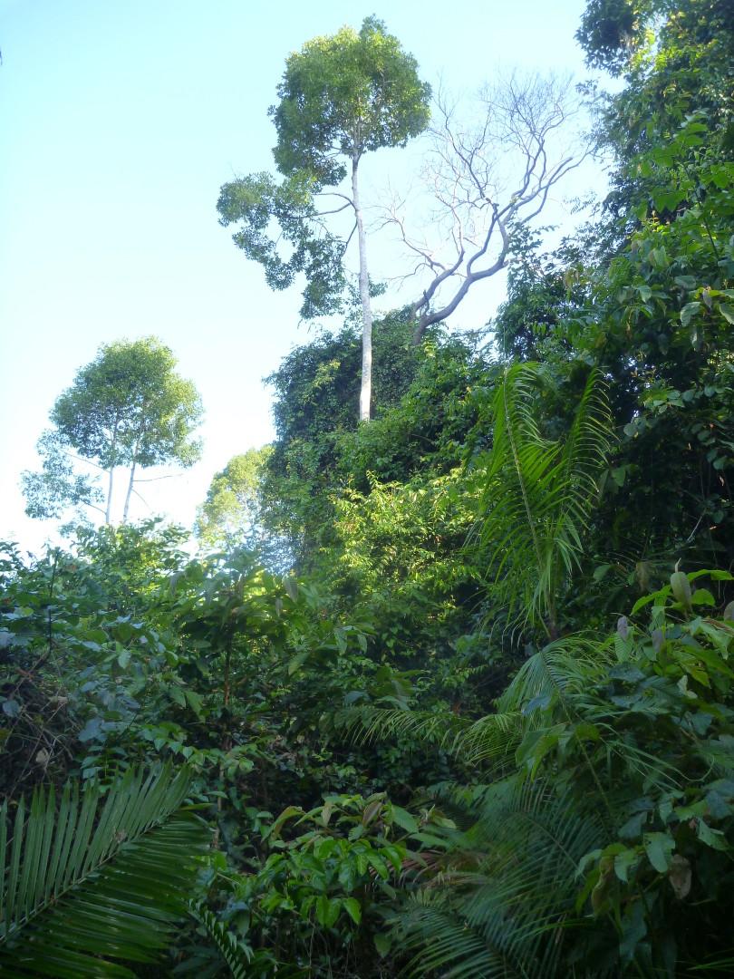 pravá džungle Khao Yai v Thajsku, kousek od bangkoku.