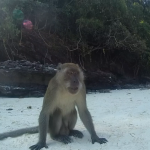 Monkey beach (13)