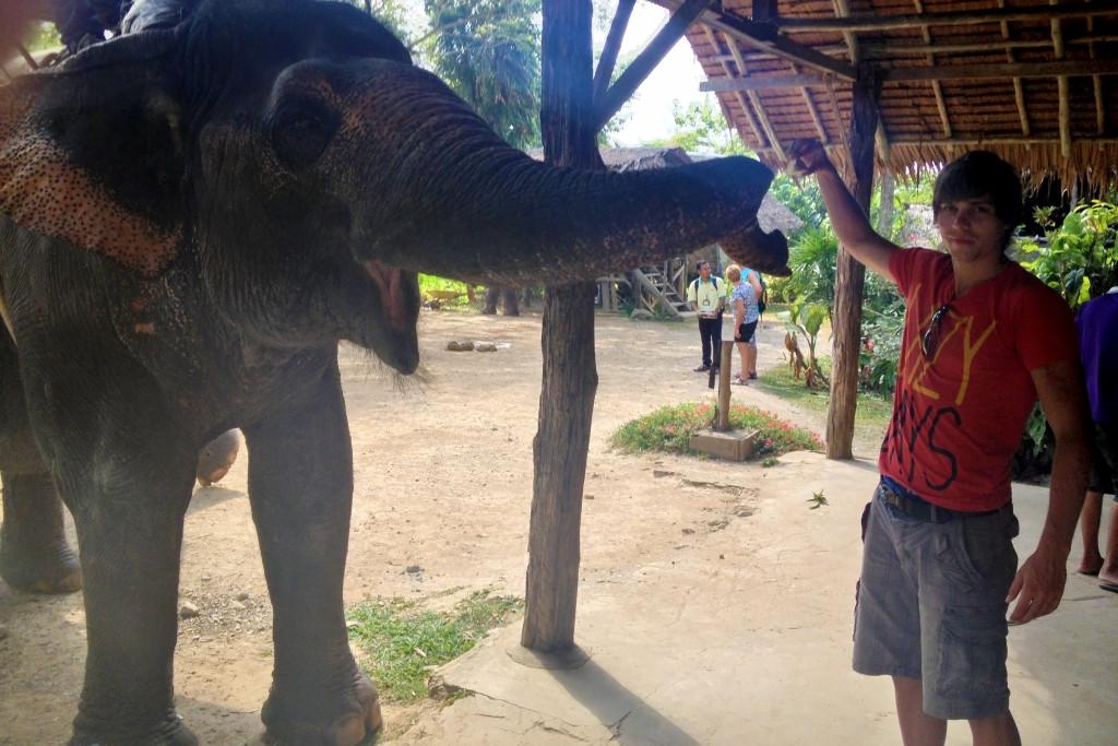 Krmím slona
