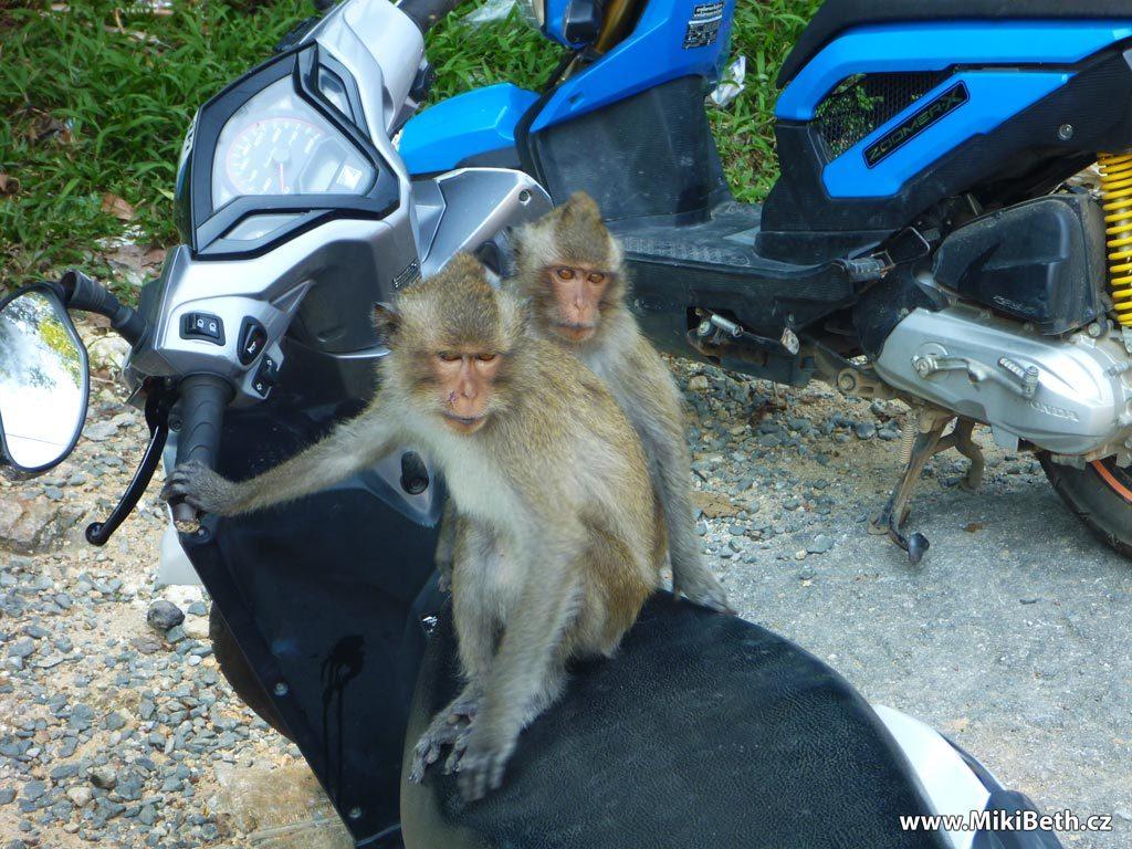 koh chang skutr opice